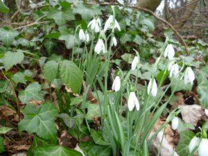 WIld Spring Flowers in Devon