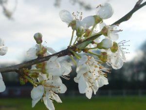 Spring Flowers for Spring Break