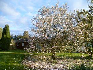 Magnolia Lodge in Spring