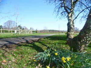 Spring Sunshine in Devon